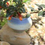 椎猫白魚の器と植物の写真