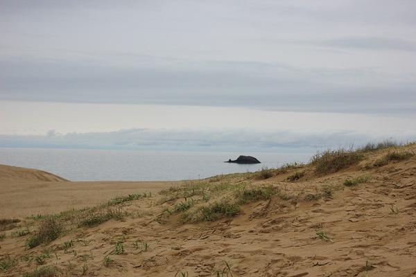 鳥取砂丘、植物が生えてる砂地の写真