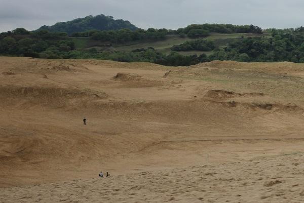 鳥取砂丘の織りなす造形美、砂や丘、緑の山の風景写真
