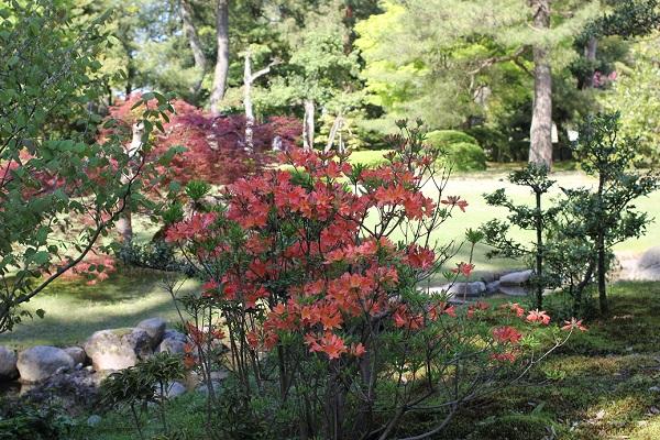 兼六園の庭園、ツツジと新緑の写真