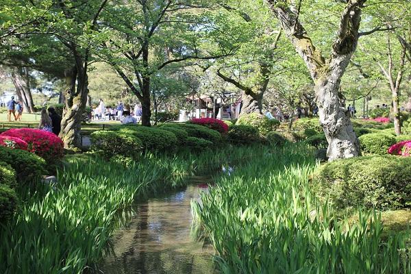 兼六園の新緑とツツジ、菖蒲園の様子の写真