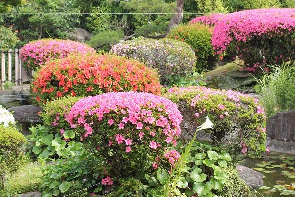 興福寺のの庭園風景、ツツジが咲いてる写真