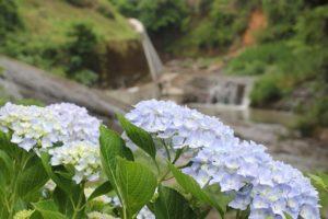 轟の滝公園の滝とアジサイの写真