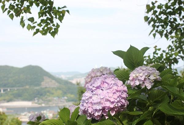 神の島公園のアジサイと海が望める景色の写真