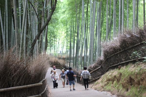 夏の竹林の小径、竹林と行きかう人々の様子の写真