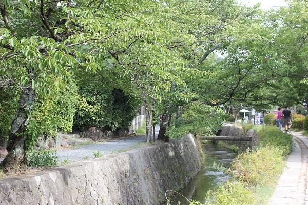 夏の哲学の道の様子の写真、緑の葉が綺麗な桜の木、川、小道、歩いてる人