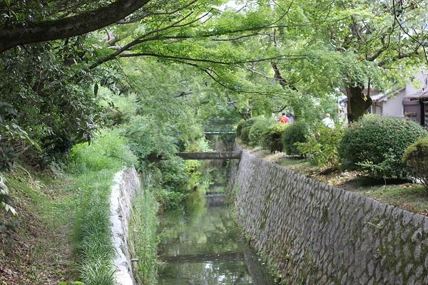 爽やかな緑でいっぱいな哲学の道沿いの川の写真