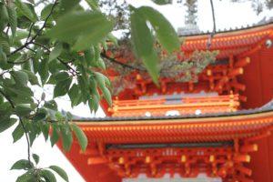 夏の清水寺、緑の葉をつけた木と「仁王門」の写真