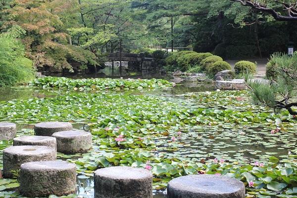 平安神宮の蒼龍池にたくさんのスイレンがある様子と 臥龍橋の写真