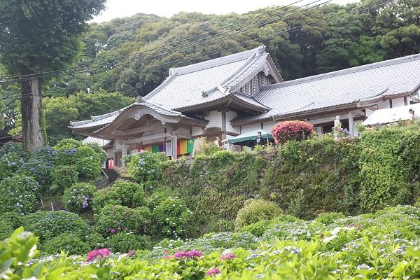 大聖寺の本堂とあじさい園の写真