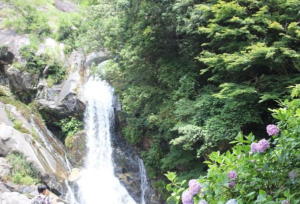 見帰りの滝にある滝の様子と咲いてる紫陽花の写真