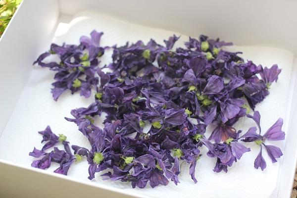 乾燥させて箱に入れたマロウの花、4日目の写真