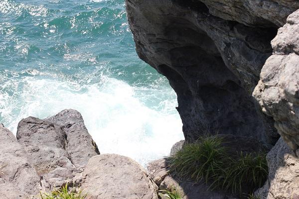 堂崎鼻、岩から真下に見た様子(浸食された岩や植物)の写真