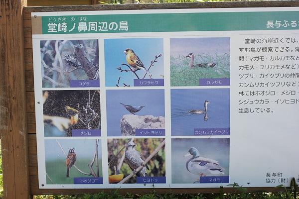 堂崎ノ鼻周辺の鳥が紹介されてる看板写真