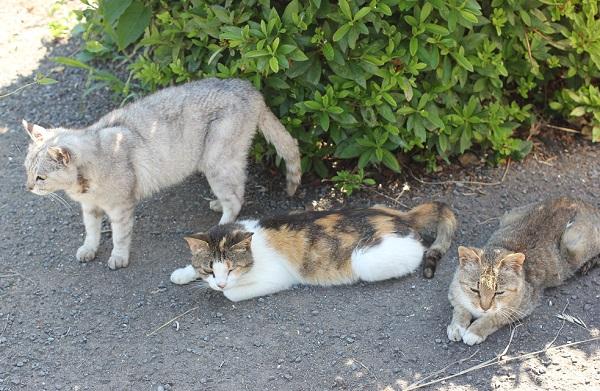 堂崎鼻の駐車場にいた3匹のネコ、一匹だけ立ち上がった写真。