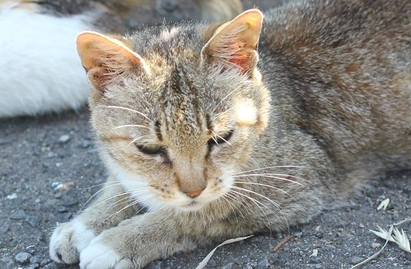 堂崎鼻の駐車場でマイペースに眠ってる茶色のネコの写真
