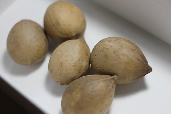 ソテツの種の写真 5個