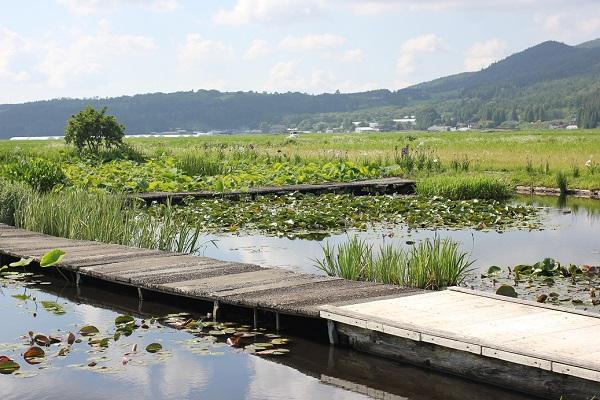 千町無田水田公園内に設置してある遊歩道とスイレン園や高原、山の様子の写真