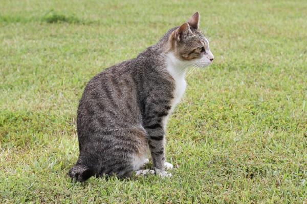 結いの浜の芝生の上で、座って遠くを見つめてる野良猫の姿の写真