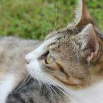結いの浜にいた野良猫、可愛い様子のアップ写真