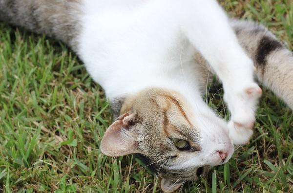結いの浜の芝生の上、横向きに寝転がってるのんびりとした表情のネコ顔のアップ写真