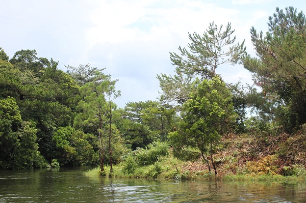 水観賞舟で鑑賞した大龍池の様子の写真