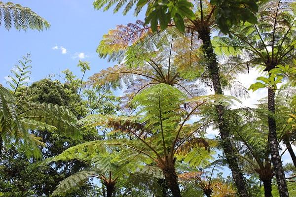 ビオスの丘の森の様子、南国の植物の写真