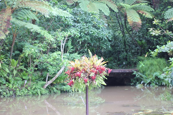 ビオスの丘の天染池の中にある植物のオブジェの写真