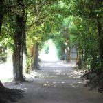 備瀬のフクギ並木、フクギのトンネルのの写真