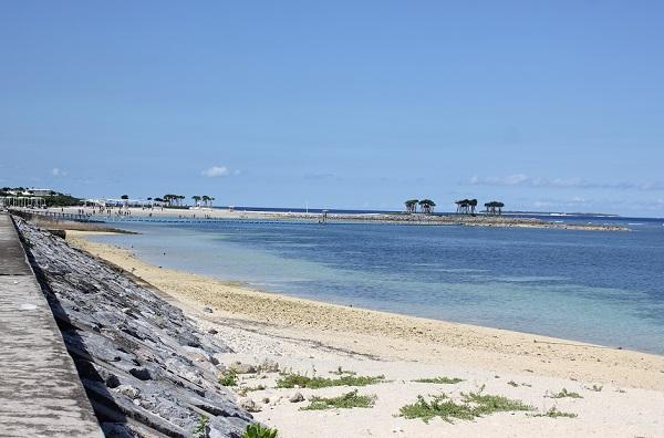 フクギ並木に平行している海岸の写真、白い砂浜と青い海