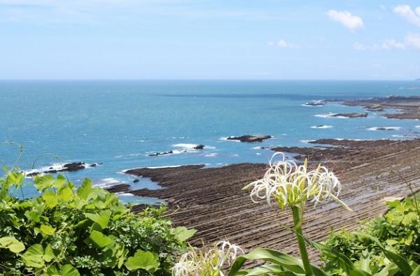 海岸に咲くハマユウと青い海の写真