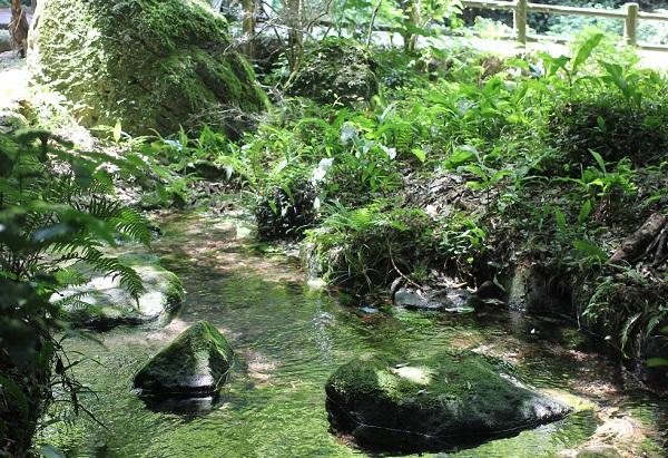 岩戸観光ガーデンにある水がキレイな場所の写真