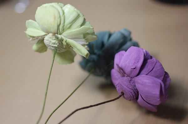 薄緑、紫、青緑のソーラーローズの写真