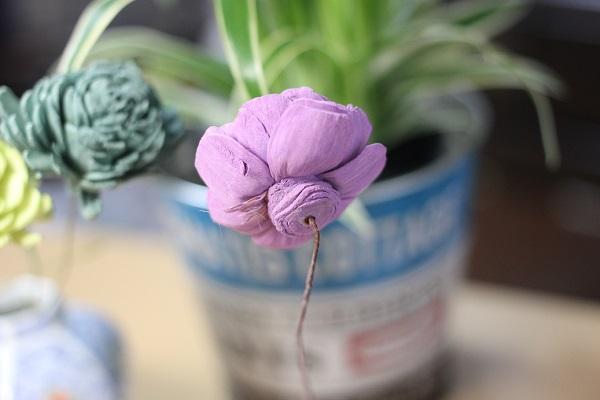 紫のソーラーローズの後ろ姿の写真
