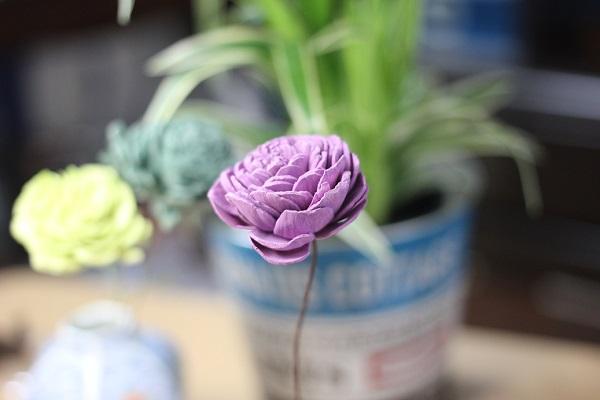 植物を背景に、一凛のソーラーローズの様子の写真