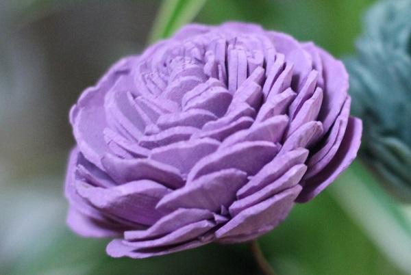 紫のソーラーローズのアップ写真