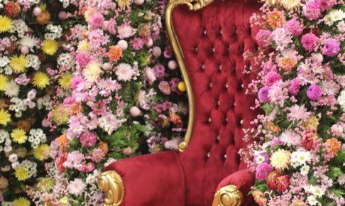 ハウステンボスの「2万本のダリア」会場内のダリアの壁と優雅な椅子の写真