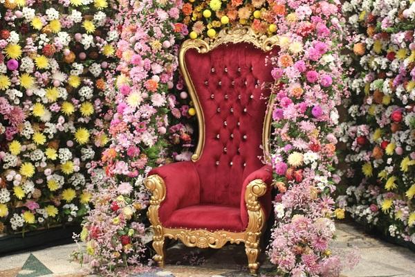 ダリアの壁と豪華な赤い椅子の写真