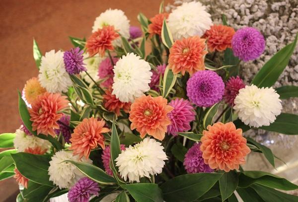 ホテルヨーロッパ、彩りが綺麗なダリアの生け花の写真