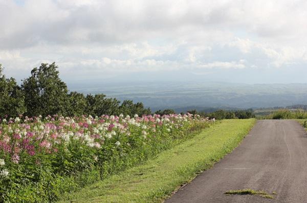 ヒコダイ公園内の散策道からの風景、阿蘇の山々と花畑の写真