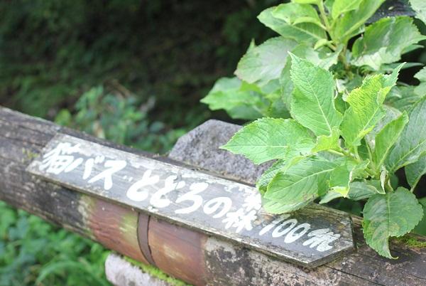 「猫バス・ととろの森100m」と書かれてる案内の写真