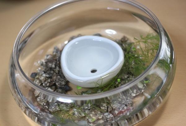 小さなメダカの水槽、ウォーターバコバを植える前の様子の写真