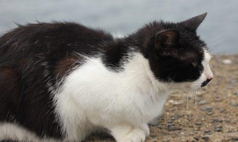 時津の海にいたネコの横姿の写真