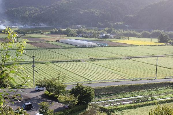 古羅漢の上から見たそば畑のようすの写真