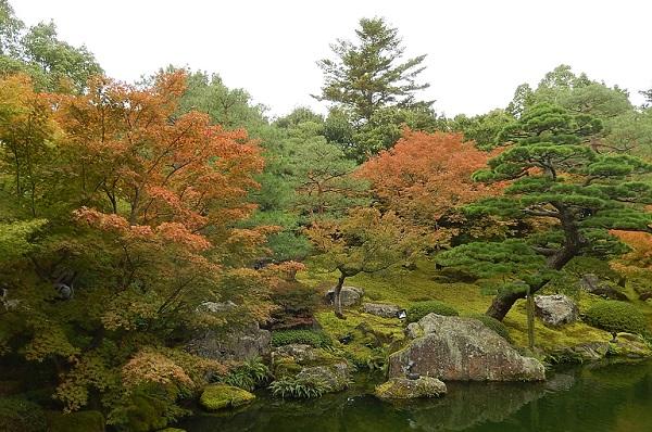 秋の由志園の庭園、池の周辺の植物。
