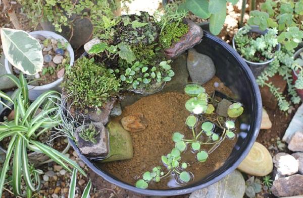 睡蓮鉢で作ったメダカや金魚のビオトープの写真