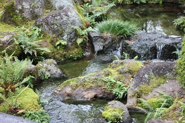 由志園の滝、植物の様子と水の流れのようすの写真