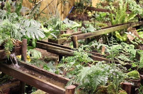 牡丹の館の緑の植物の写真(シダ他)