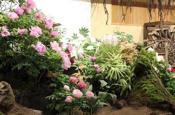 牡丹の館の牡丹と植物の写真