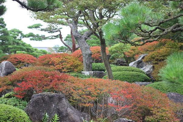 由志園の築山の写真、ツツジの紅葉